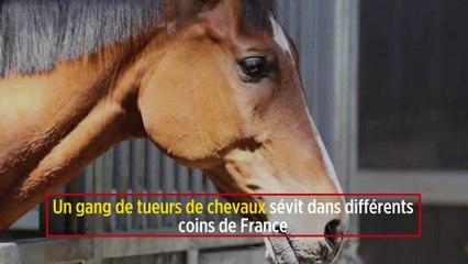 Un Gang De Tueurs De Chevaux Sevit Dans Differents Coins De France Le Point
