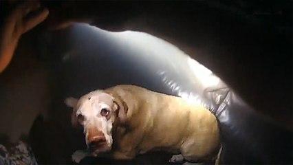 Un police court sauver un chien enfermé dans une maison en feu
