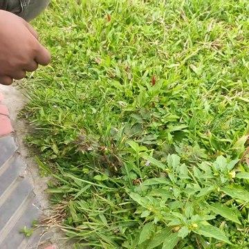 Bangabandhu Sheikh Mujib Safari Park, Video  Part - 2