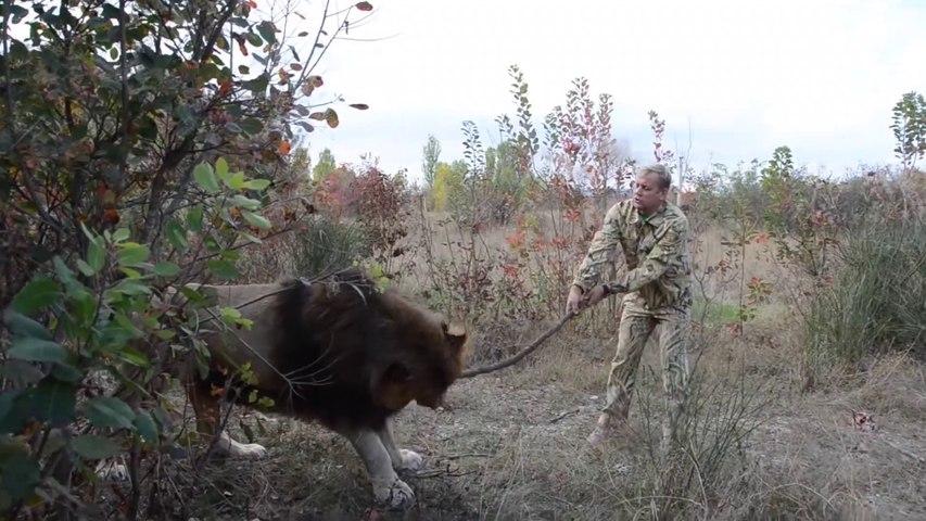Il joue avec son lion comme si c'était un chien... Va chercher le baton