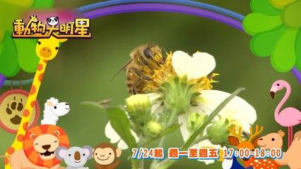 龍華動畫台【動物大明星S3】精采預告