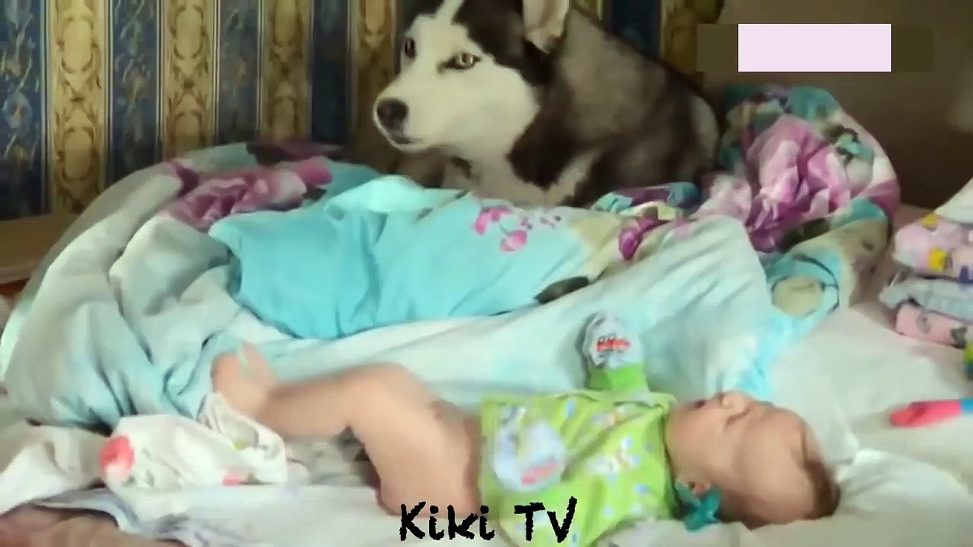 cute baby and pets - The dog's reaction to the baby for the first time is super fun