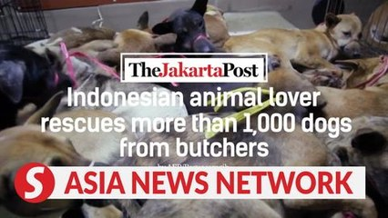 The Jakarta Post | Indonesian animal lover rescues more than 1,000 dogs from butchers