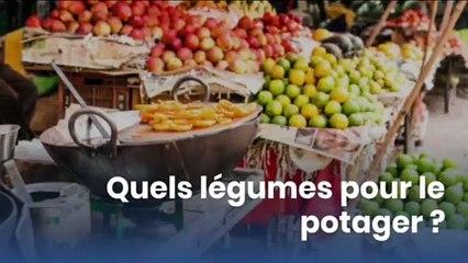 Quels légumes pour le potager