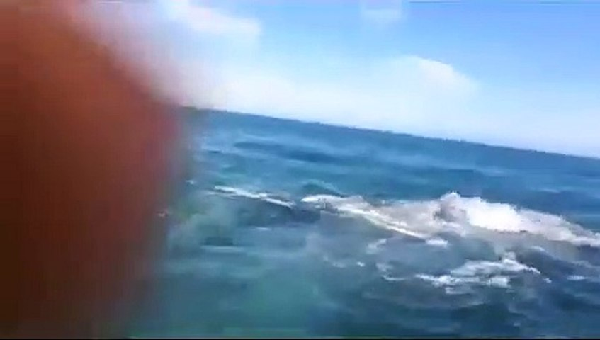Une baleine lui met une belle claque... au sens propre