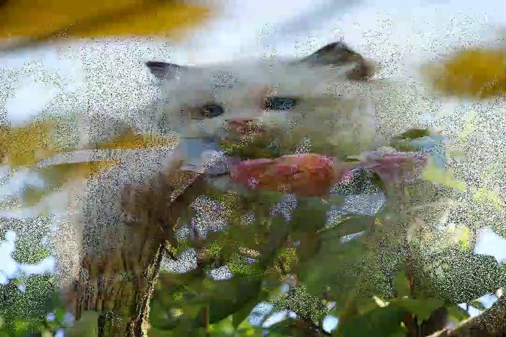 cute cats| cats are cute| cute cat videos| cute cat funny videos| cat| cats| kittens| part 2