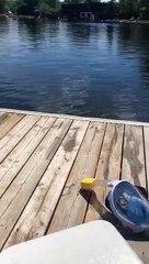 Ce chien debout dans l'eau ressemble à s'y méprendre à... Dobbie !