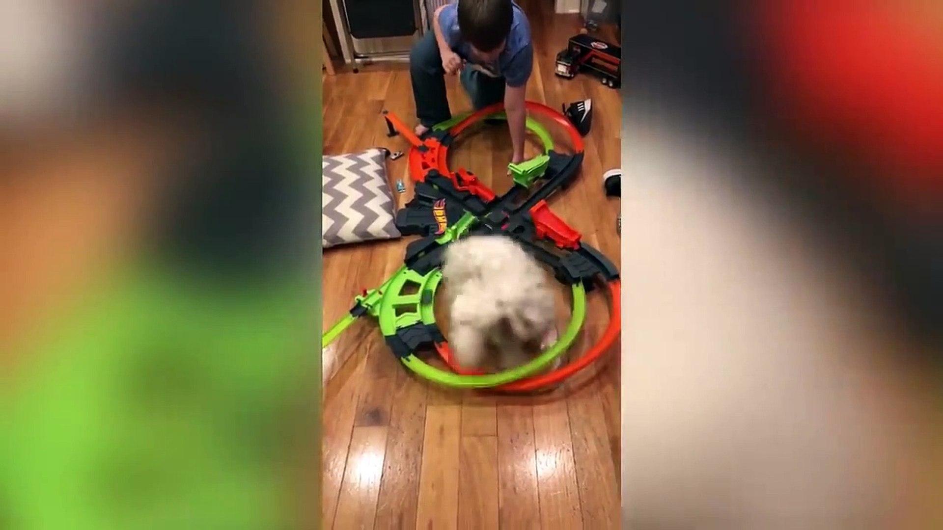 Cute Puppies Videos!!