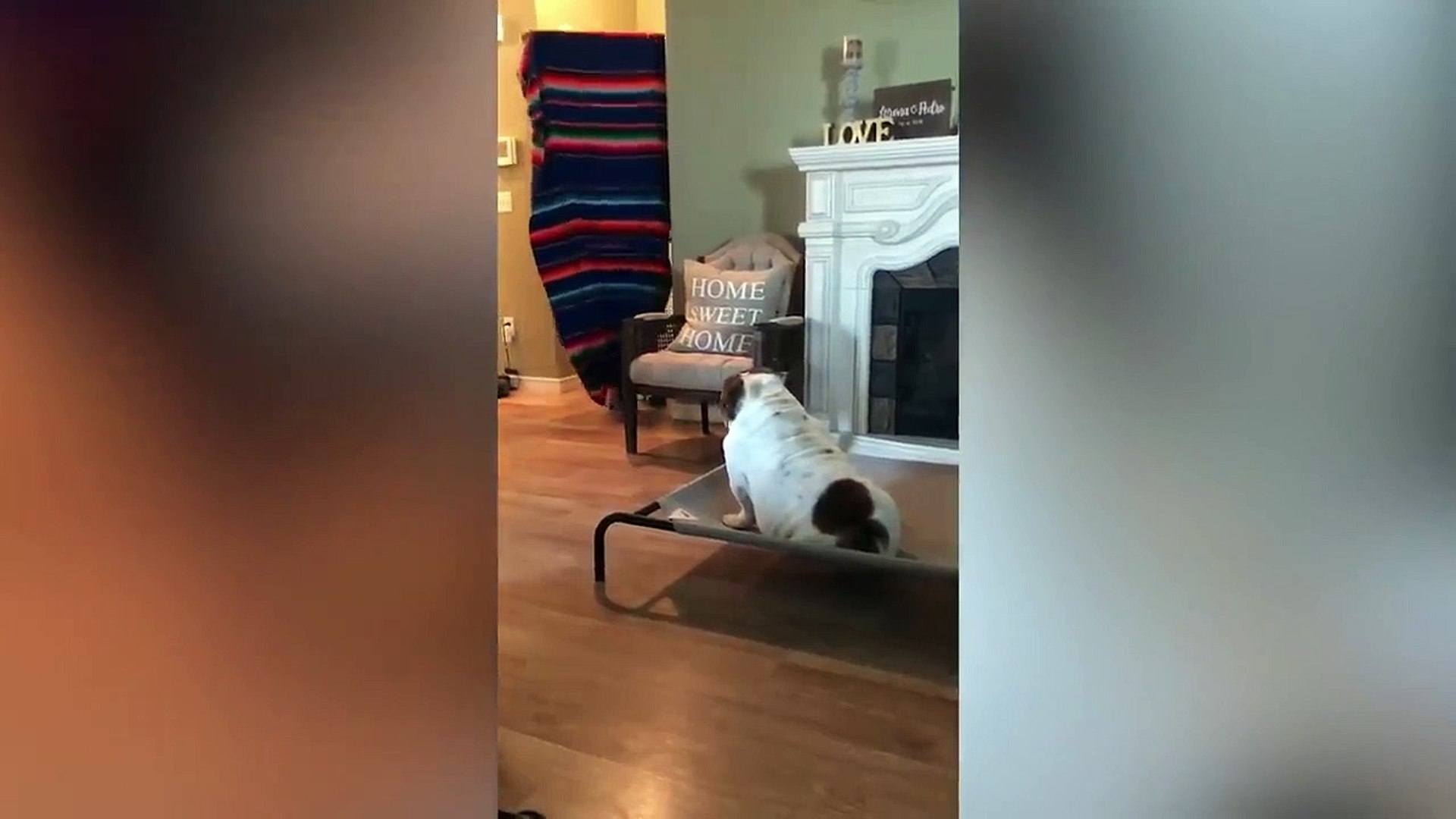Cute and Funny Bulldog Videos!