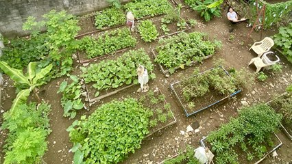 This QC Community Started Their Urban Garden For P300