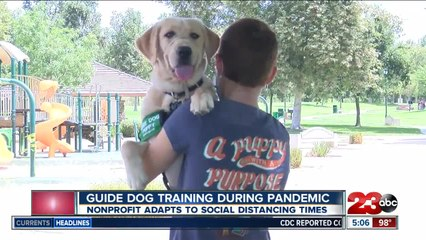 Guide Dogs for the Blind adapts puppy training to social distancing guidelines