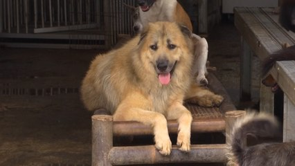 Shelter in Indonesia sees surge in abandoned dogs amid Covid-19 pandemic