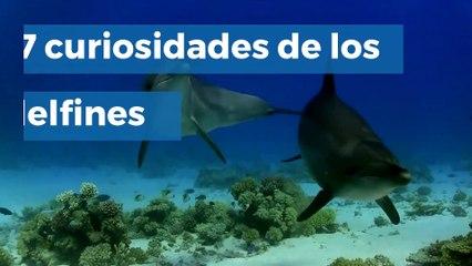 7 curiosidades de los delfines