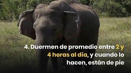 10 datos curiosos sobre los elefantes