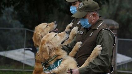 Đức: Huấn luyện chó đánh hơi Covid-19 | VTC