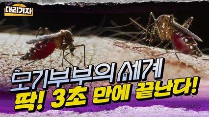 [엠빅뉴스] 모기 교미 장면 직캠! 모기에 대한 오해와 진실 낱낱이 파헤쳐 드립니다