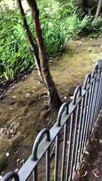 Rats filmed by water in Lochend Park