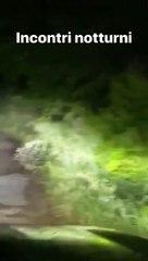 Strani incontri notturni per Valentino Rossi, un'istrice taglia la strada al Dottore