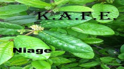 KAFE - NIAGE