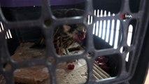 Tunceli'de bitkin halde bulunan yavru şahin korumaya alındı