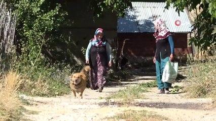 """""""Kurtlar Parçalasın"""" Diye Dağa Atılan Köpeklere Köylüler Sahip Çıktı"""