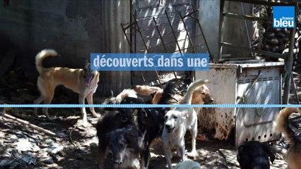 Béarn : une cinquantaine de chiens affamés et malades découverts dans une propriété