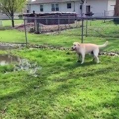 Momento em que cão cego descobre uma poça de água pela primeira vez