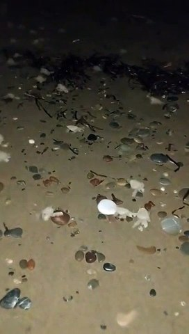 Il guide des centaines de bébés tortues vers l'océan... adorable