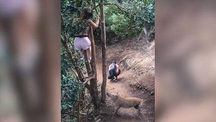 Auf Baum getrieben: Wanderin flüchtet vor Wildschwein