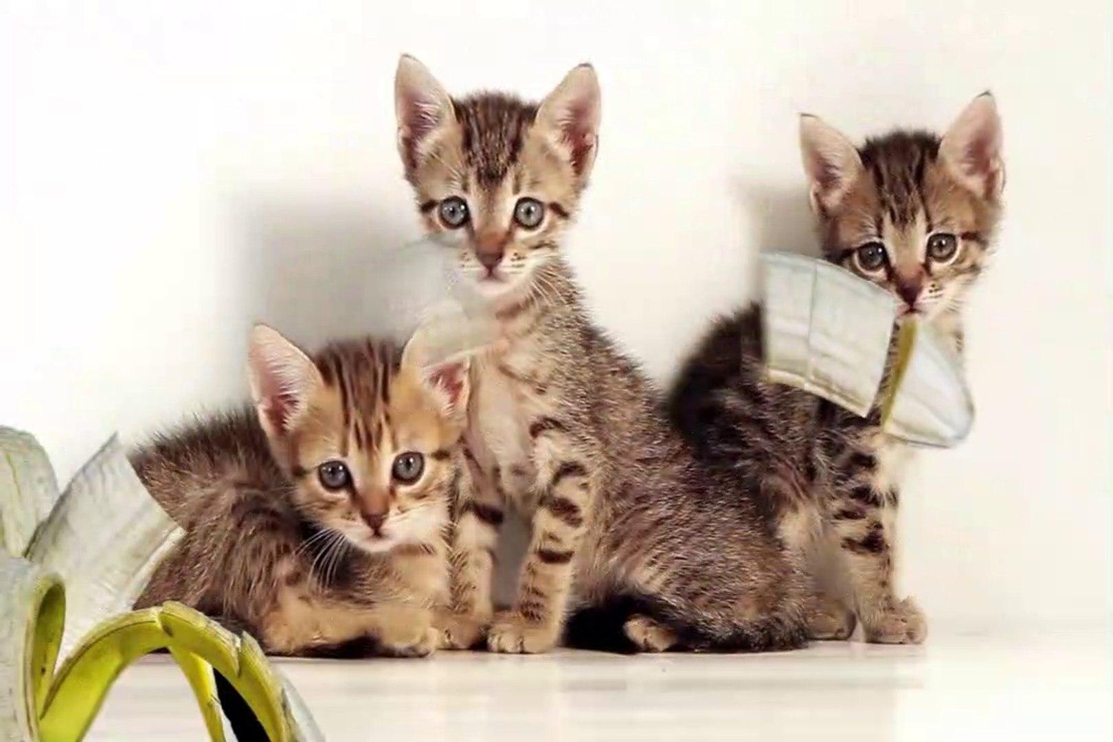(NEW) | Cats are cute| cute cats | cute cat| cute cats videos| cats