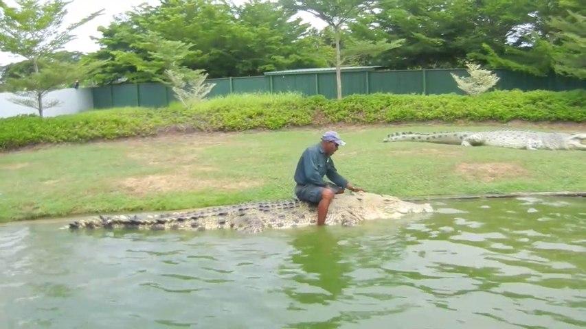 Mieux que l'équitation, chevaucher un crocodile de 5m de long