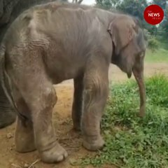 Bannerghatta Biological Park welcomes baby elephant