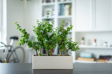 Indoor Plants to Liven Up Your Kitchen Space