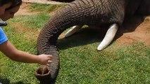 Elephant ,  love towards elephant ,  elephants