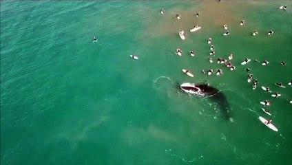 Así fue el encuentro de unos bañistas con una ballena austral