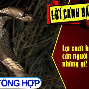 Lại xuất hiện rắn độc cắn người - Cần chú ý những gì?