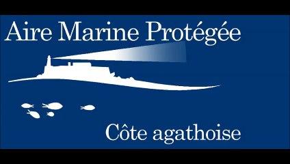 AGDE - Une baleine et un rorqual commun observés dans l'aire marine protégée de la côte agathoise