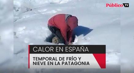 Rescatando ovejas sepultadas bajo la nieve