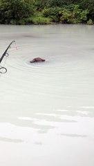 Quand tu pêches et un ours s'approche dangeureusement de ton bateau