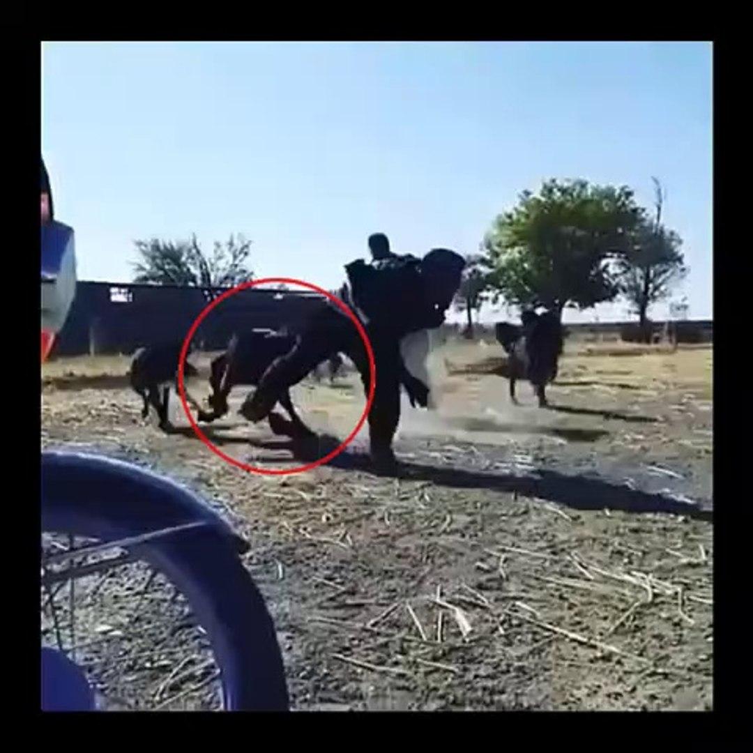 iRAN SARABi COBAN KOPEKLERi ve SAHiPLERi - PERSiAN SHEPHERD DOG and OWNERS