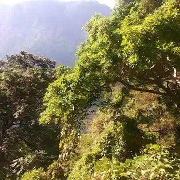 OOTY NILGIRI FOREST VIDEO ONE