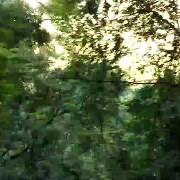 OOTY NILGIRI FOREST VIDEO 2