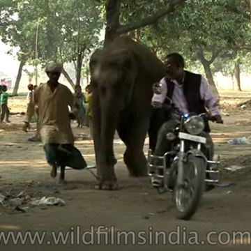 Baby Elephant chases after her owner as he leaves after selling her!