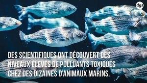 Des concentrations élevées de polluants découverts chez les baleines et les dauphins échoués