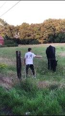 Belgique - Les vidéos honteuses de ces jeunes entrés dans un champ pour terroriser un cheval et un poney