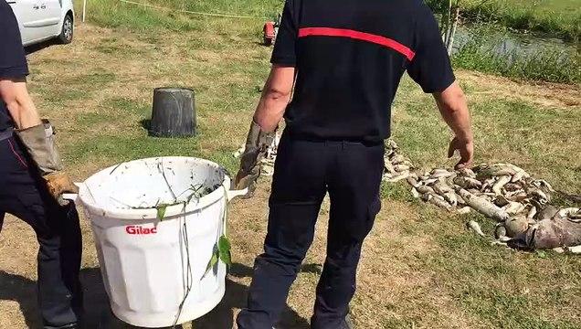 Les pompiers ramassent les poissons morts dans l'Aisne