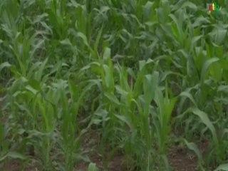 RTB / Mise au point du Projet de gestion des risques agricoles et alimentaire avec les  agriculteurs de la Boucle du Mouhoun