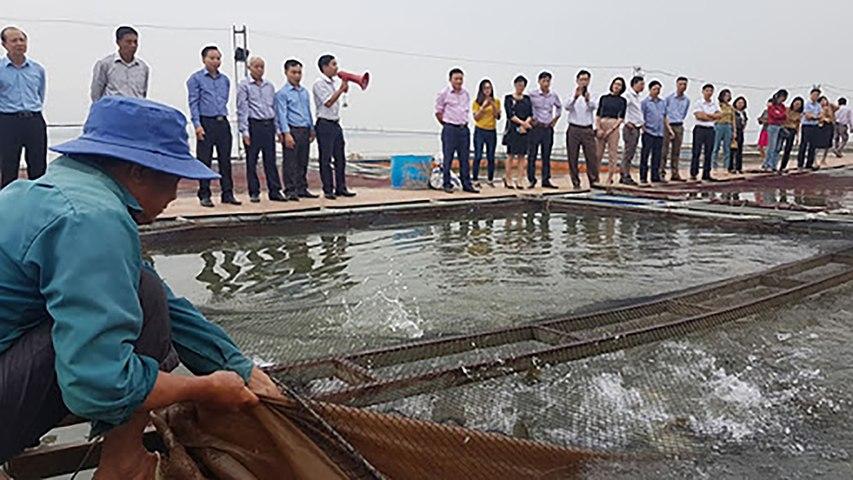 Trang trại bạc tỷ của lão nông ngoại thành | VTC | Godialy.com
