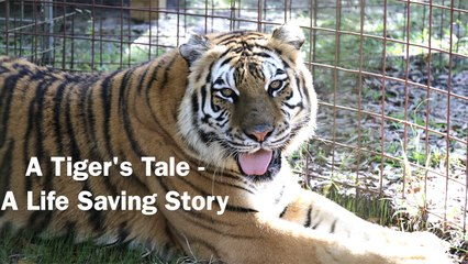 A Tiger's Tale - A Life Saving Story, Episode 1