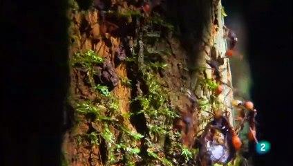 COLOMBIA SALVAJE Chiribiquete, viaje al corazón de la AMAZONIA. (Jaguar, perezosos, anaconda verde) - GRANDES DOCUMENTALES
